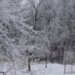 Tree with thick frost